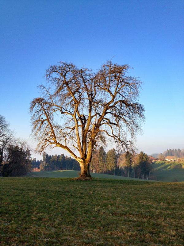 BaumkalenderMärz