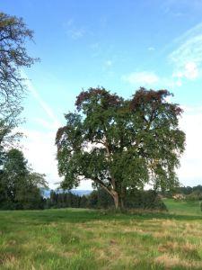 BirnbaumAugust